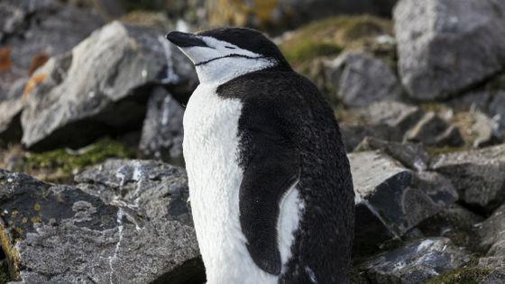 Hej, niedowiarki globalnego ocieplenia: na Antarktydzie jest 21 stopni Celcjusza