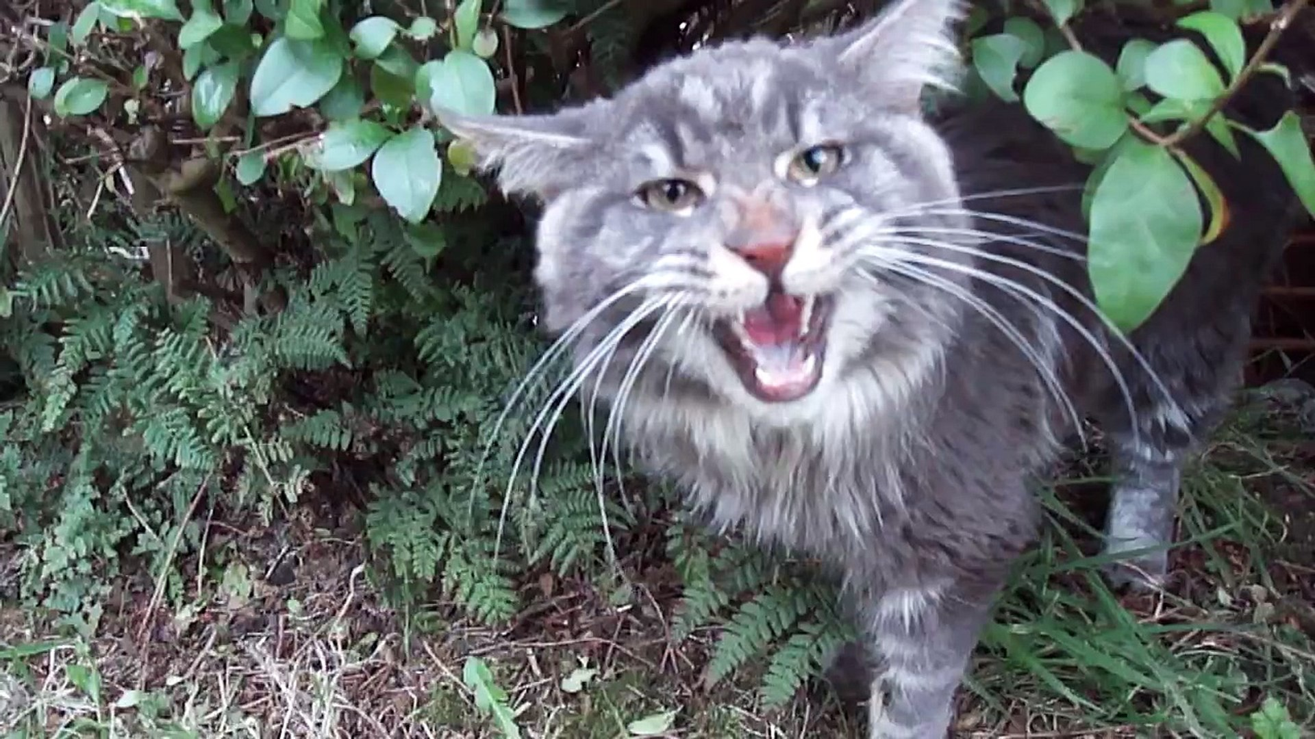 Mamy ¦mieszn± ¦rodê, czas wiêc na kolejny s³odki i zabawny filmik z kotem