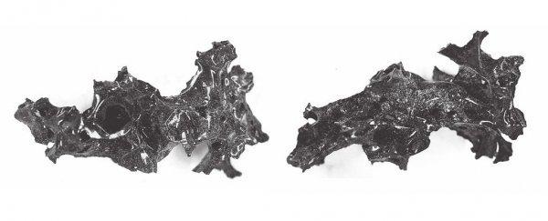 Naukowcy odkryli, ¿e mózgi ofiar Wezuwiusza zamieni³y siê w szk³o
