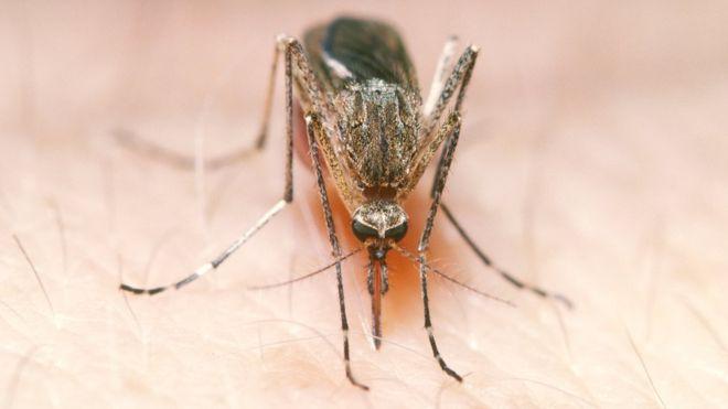 Ban za komara, czyli jak Twitter ¶rednio sobie radzi z mow± nienawi¶ci