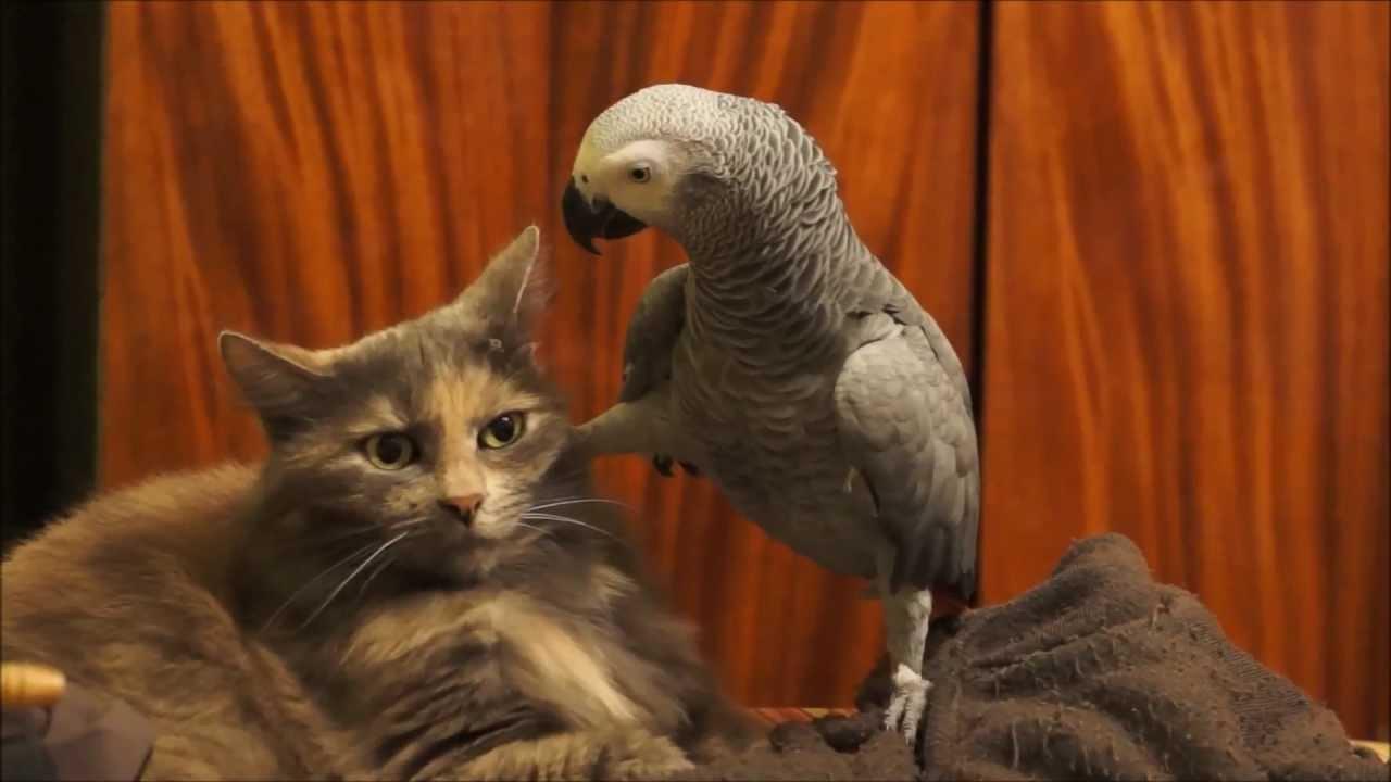 Papuga samobójca albo kot o cierpliwo¶ci ¶wiêtego