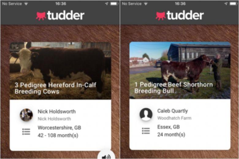 Tudder, czyli Tinder dla weso³ych ja³ówek i rogatych byczków